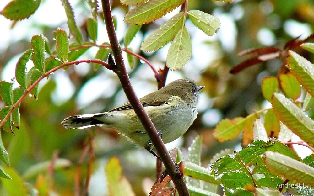 Where Were You When The Riroriro Sang? -  Riroriro - Grey Warbler - NZ by AndreaEL