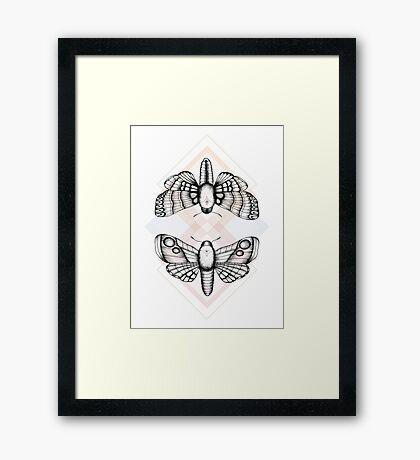 Polillas Framed Print