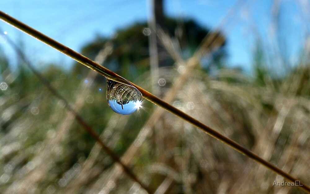Horton Hears A Who -  Dew Drop - NZ by AndreaEL
