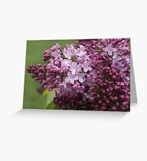 Beauty of a rainy day Greeting Card