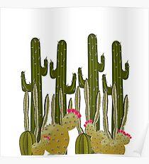 Cactus Sanctuary Poster