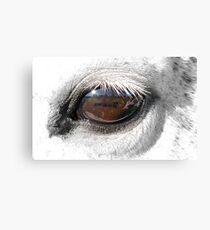 Reflection In A Golden Eye - Horse - VZ Canvas Print