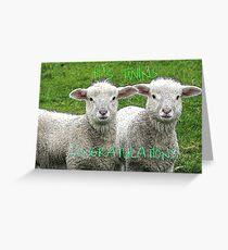 It's TWINS - CONGRATULATIONS - Lambs - NZ Greeting Card