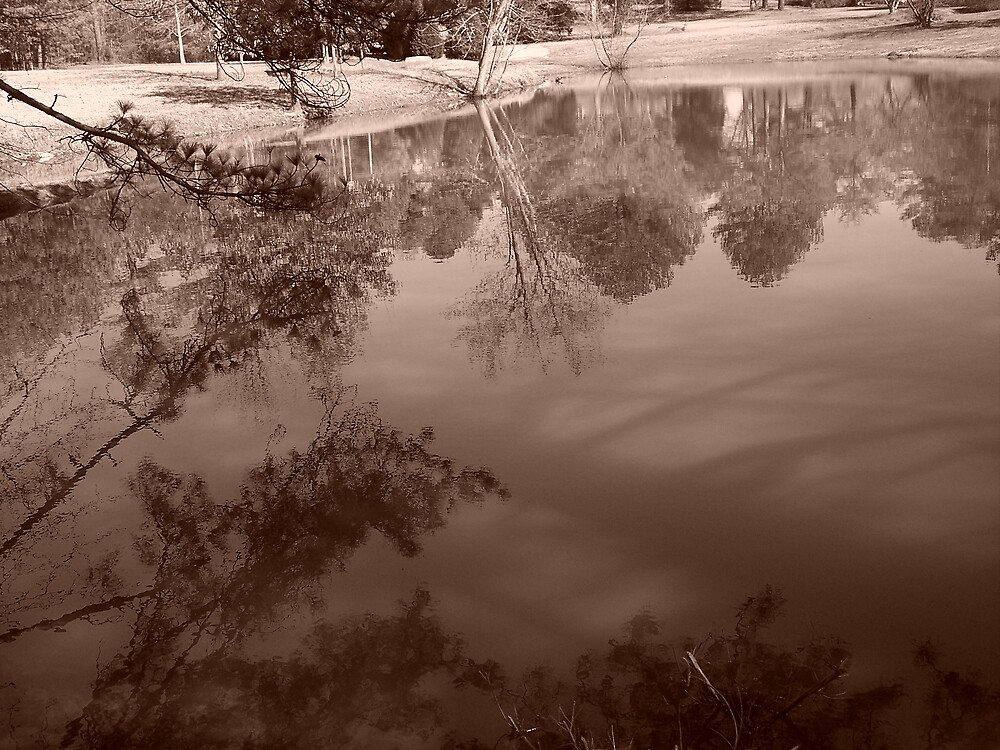 pond reflections by dannielle