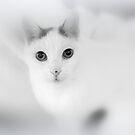 weißes Porträt von Marianna Tankelevich