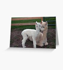 Casper and Daisy Greeting Card