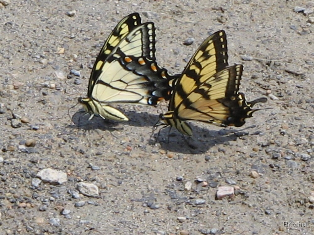 Swallow Tail Dance by Britchix