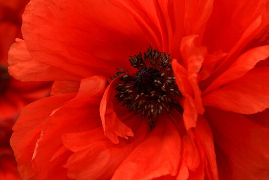Poppy Palette by Holly Cawfield