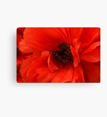 Poppy Palette Canvas Print