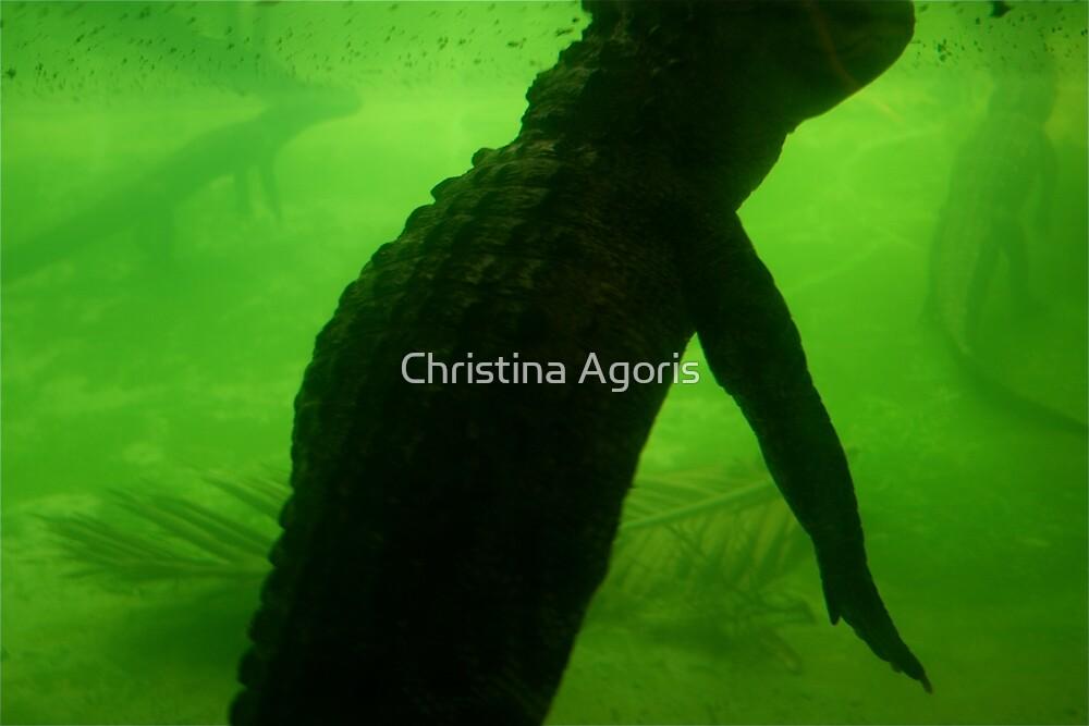 alligator by Christina Agoris