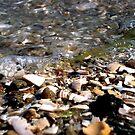 Seashells by the Seashore by Josh Prior