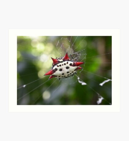 Crab-Like Spiny Orb-Weaver Art Print