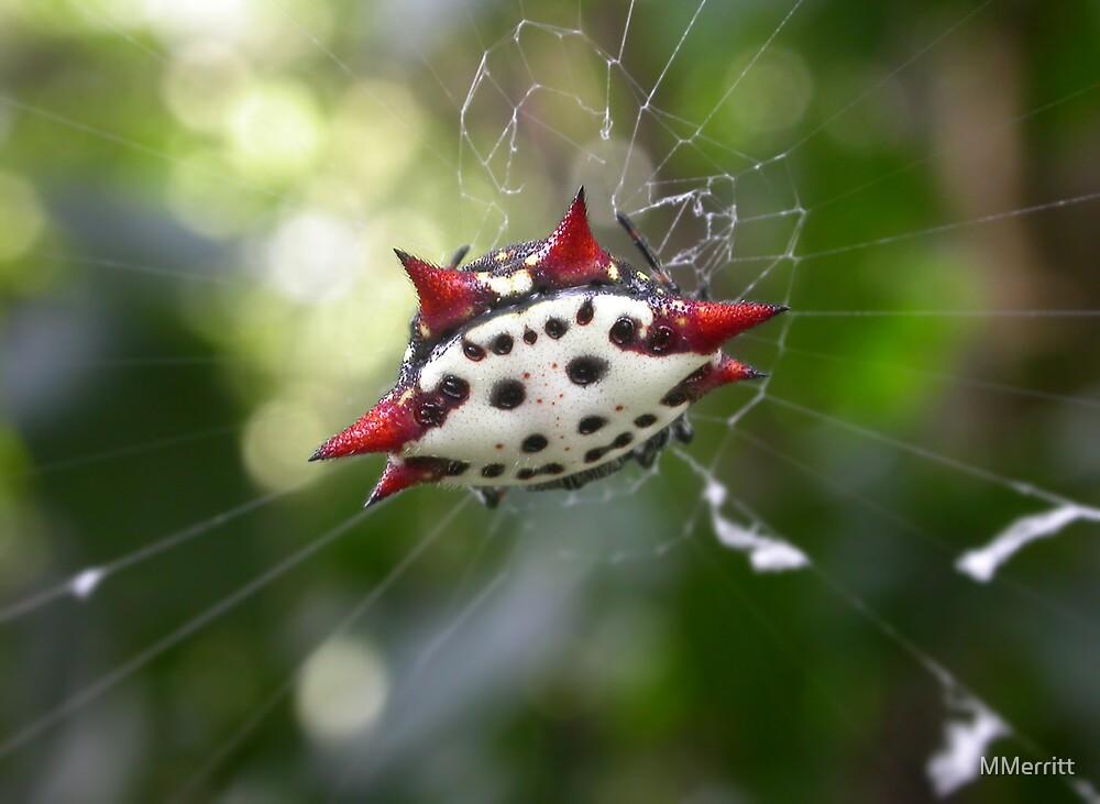 Crab-Like Spiny Orb-Weaver by MMerritt