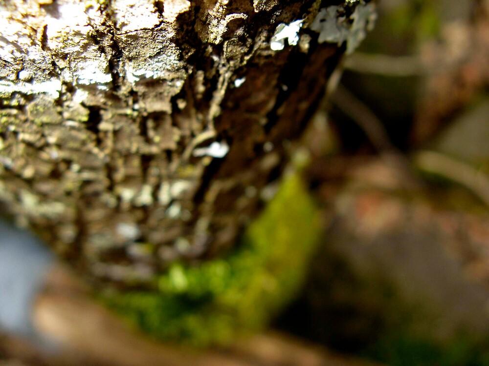 woodstock by prescott mccarthy
