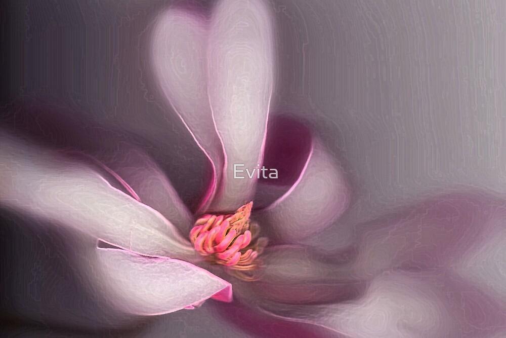 Magnolia by Evita