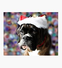 The Colour Of Christmas - Boxer Dogs Series Photographic Print