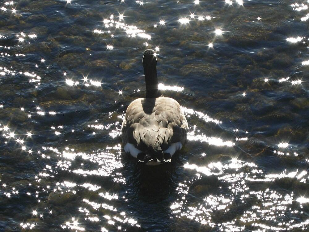Goose by JLDunn