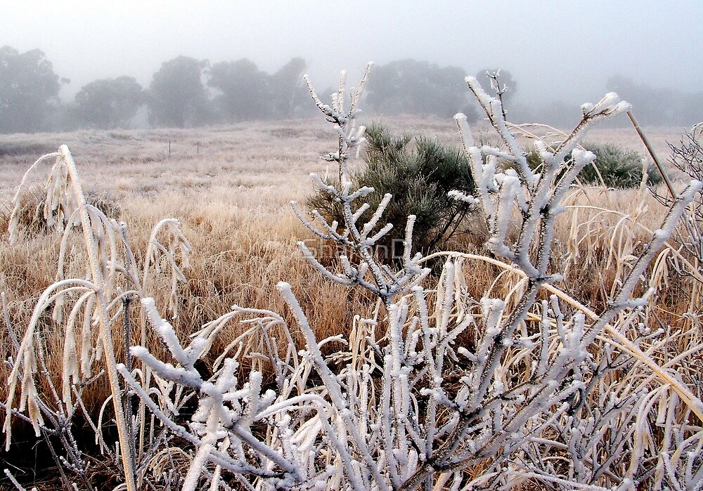 Frost and Fog by SharonD