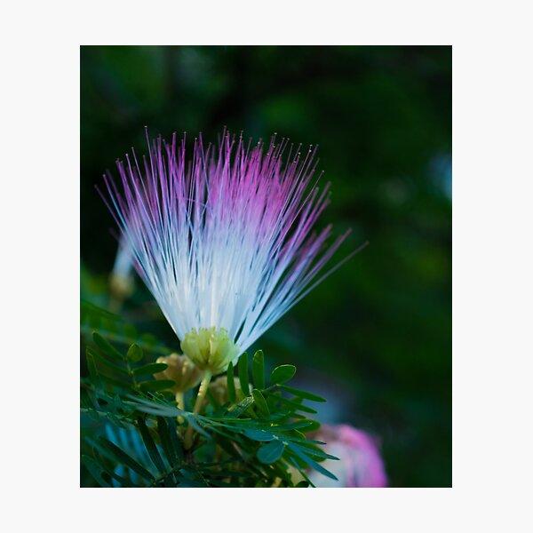 Pom Pom Flowers Photographic Print