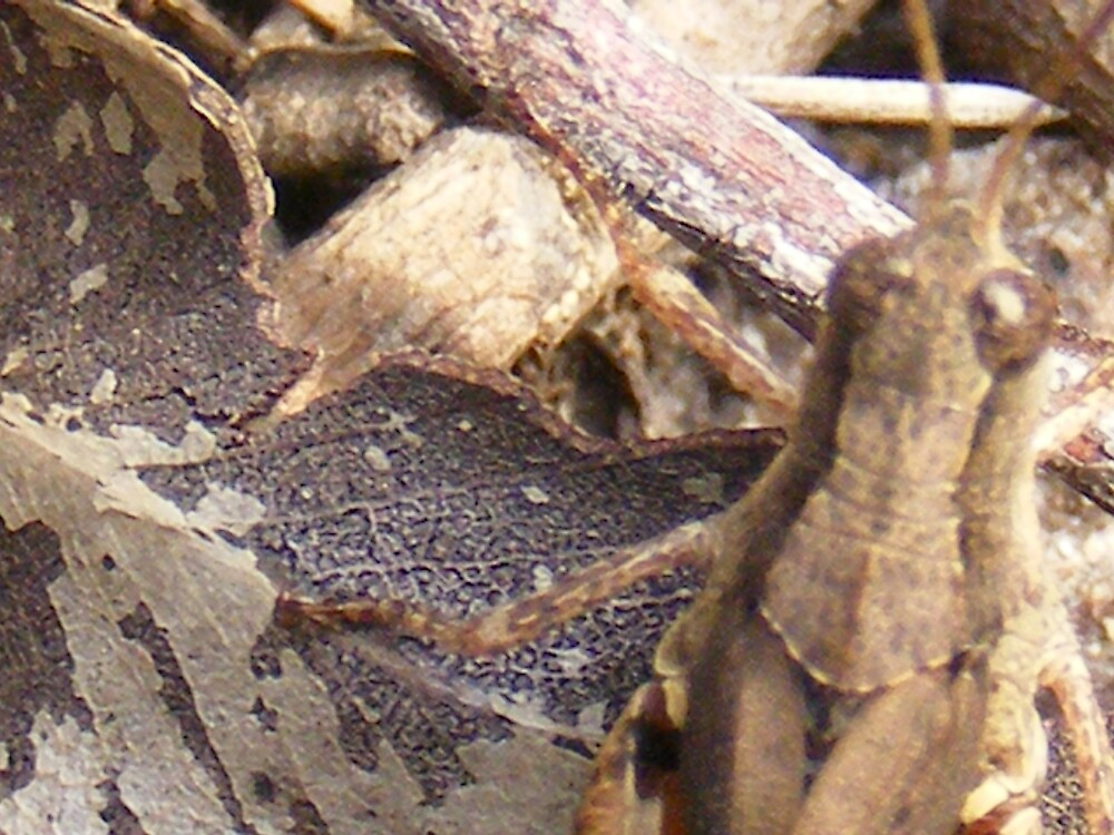 Eye of the Grasshopper? by jbrinx27