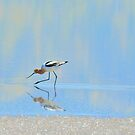 Reflective Delight by Sandy O'Toole