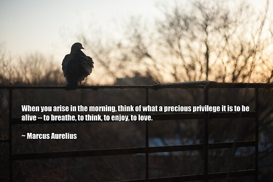Morning Gratitude Quote By Marcus Aurelius Posters By W Lotus