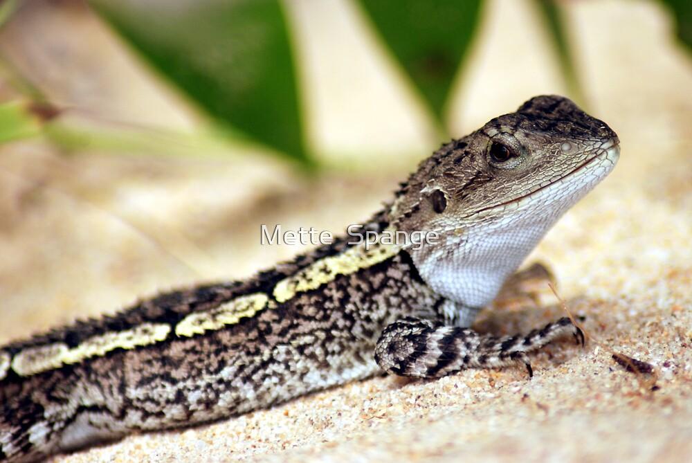 Smiling Lizard - Australia by Mette  Spange