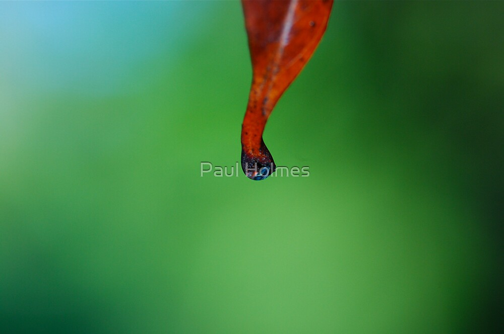 Red Leaf by Paul Holmes