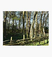 Bluebells Behind A Woven Wooden Fence Photographic Print