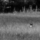 Stealth Kitty by Randy Turnbow