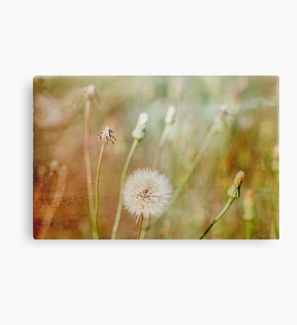 One last wish Canvas Print