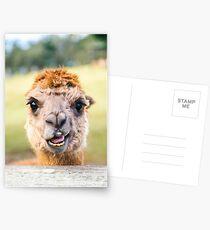 Funny Alpaca Postcards