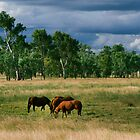 Horses Grazing by Rob D