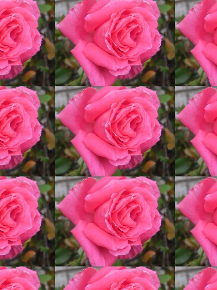 Pink Reverberation  by pandpmedia