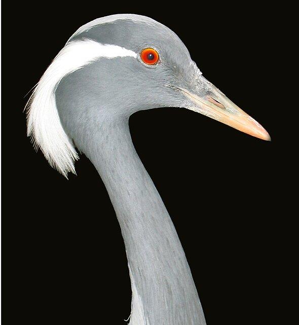 A Curious Crane by BizziLizzy
