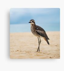 Bush Stone Curlew Resting on the Beach. Metal Print