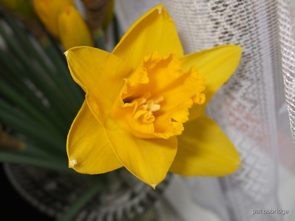Daffy by pat oubridge