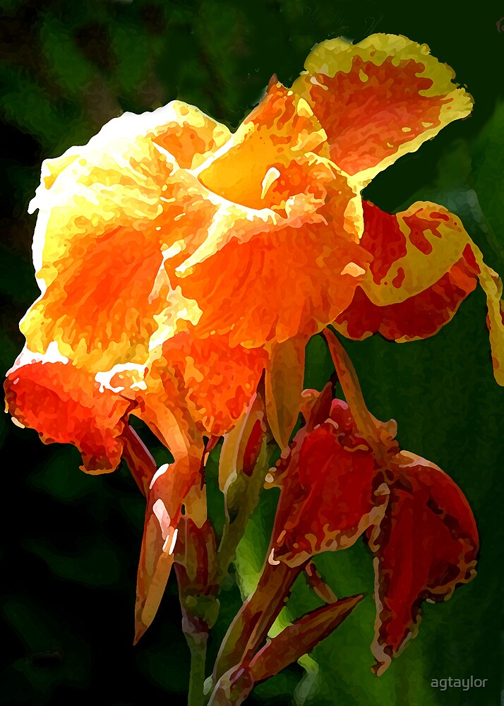 Orange Personified by agtaylor