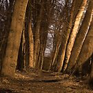 Midnight Walk by Scott Moore