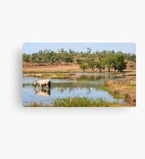 Lunch at the Billabong - Northern Territory Canvas Print