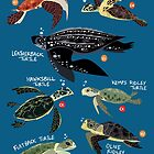 Sea Turtles of the World by rohanchak