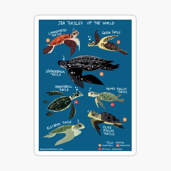 Sea Turtles of the World Sticker