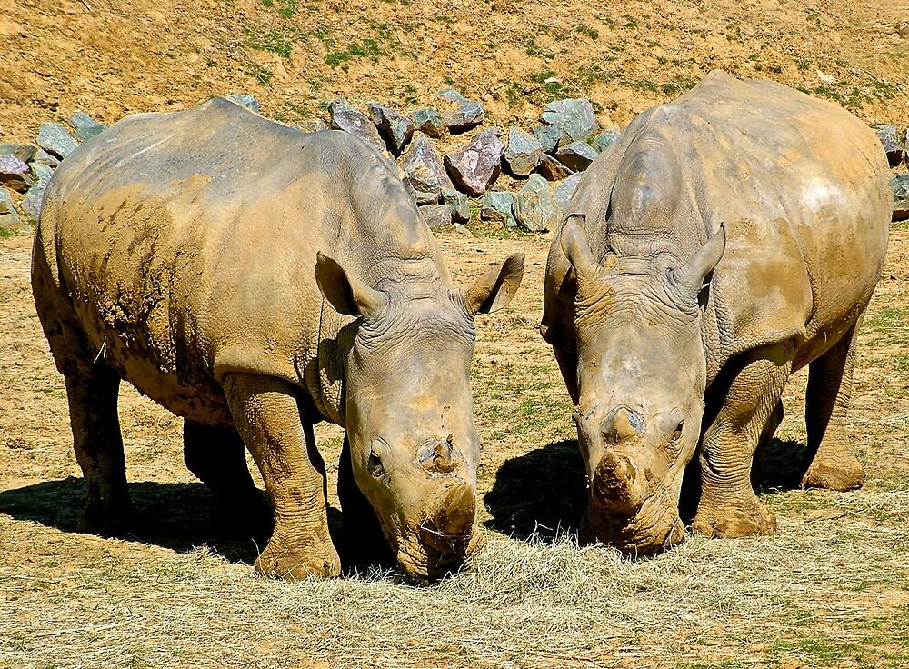 Two Rhinos by BizziLizzy