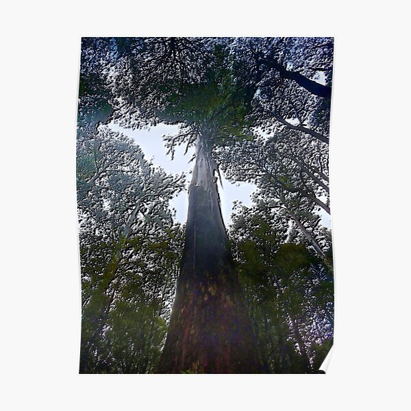 MT FIELD ~ SCENES & SCENERY ~ D1G1TAL-M00DZ ~ Tall Tree by tasmanianartist Poster