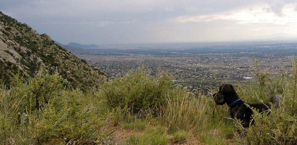 Somewhere near Albuquerque by vcharters