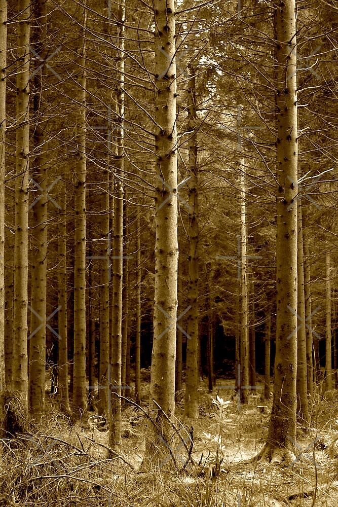 Shearwater Woodland, Wiltshire by Victoria Ashman