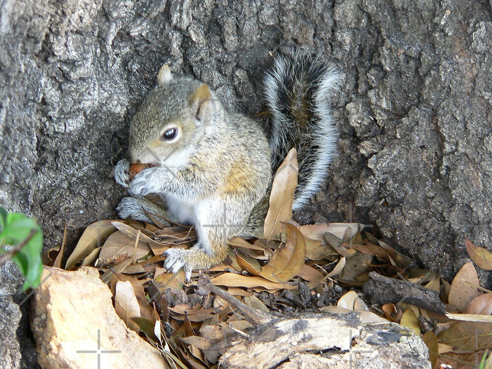 Little Guy Working On A Nut by kevint