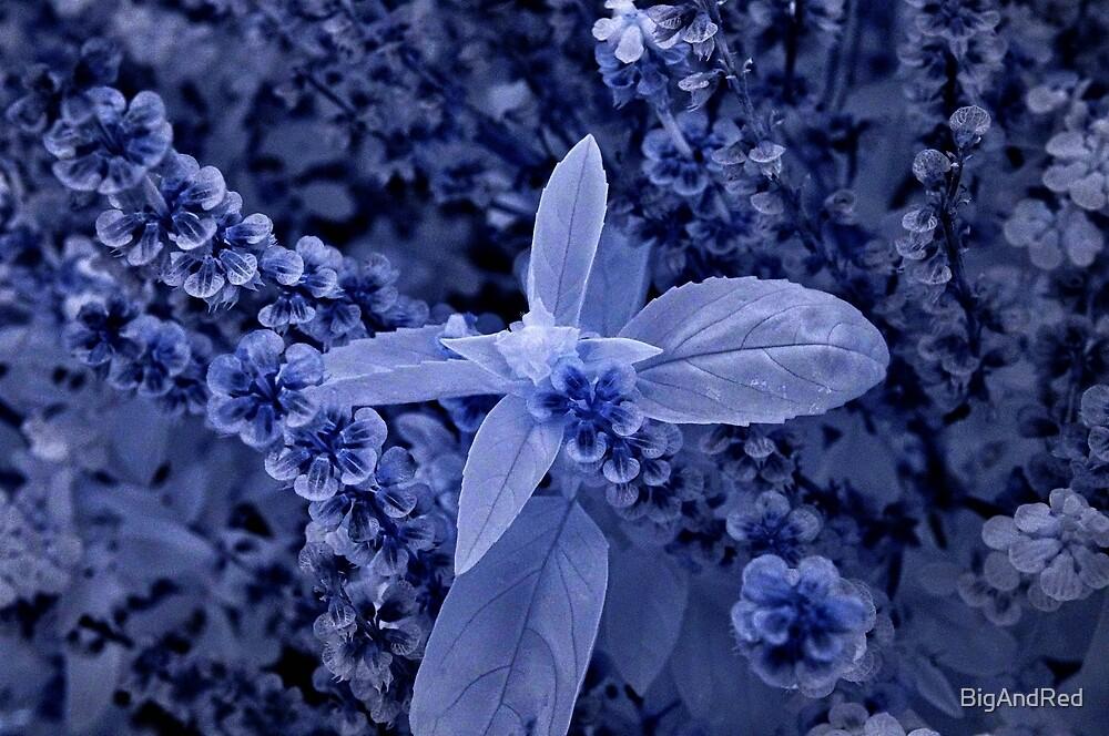 basil flower macro ir by BigAndRed