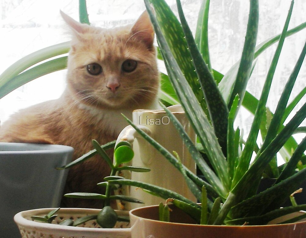 In a Potted Jungle by LisaO