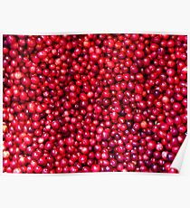 Cranberry Harvest - Fall Autumn Season - Plentiful Red Berries Poster